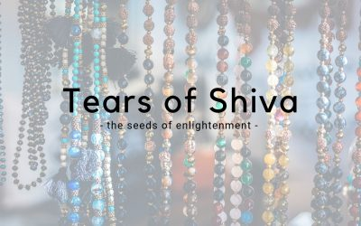 Tears of Shiva – The Seeds of A Mystic Tree
